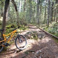 Getting onto the singletrack of Old Payoff.- Hartland Mountain Bike Trails