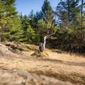 Mountain biking at Hartland.- Hartland Mountain Bike Trails