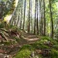 A mossy berm on Torpedo Run.- Hartland Mountain Bike Trails