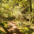 A forested section of the trail.- Jocelyn Hill via Caleb Pike