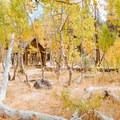 Backyard of the cabin.- Martis Creek Cabin