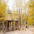 The Martis Creek Cabin within the small aspen grove.- Martis Creek Cabin