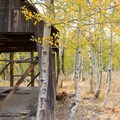 Aspens popping up all around the cabin make for some nice shade.- Martis Creek Cabin