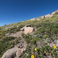 - Pikes Peak, Crags Route Hike