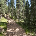 View along the Devils Playground Trail en route to Pikes Peak.- Pikes Peak, Crags Route Hike