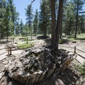 Fossilized redwood stumps in Florissant Fossil Beds National Monument.- Florissant Fossil Beds National Monument