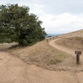 The Ancient Oaks Trail has two components: high (right) and low (left).- Ancient Oaks Trail