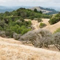 Russian Ridge Open Space Preserve from the Ancient Oaks Trail.- Ancient Oaks Trail