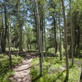 Hiking, mountain biking and horseback riding trail network at Mueller State Park.- Mueller State Park