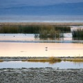 Summer Lake is home to a wide variety of waterfowl.- Summer Lake