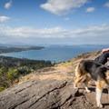 Mount Douglas is a popular spot for dog walkers, as it is the largest park in the Saanich area.- Mount Douglas Park