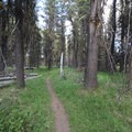 The scenery around most of the Osprey Point Interpretive Trail.- Osprey Point Interpretive Trail