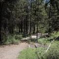 Hiking the Osprey Point Interpretive Trail.- Osprey Point Interpretive Trail
