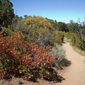 Thickets of mountain mahogany and serviceberry along the Warner Point Nature Trail.- Warner Point Nature Trail