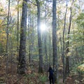 Towering old-growth forest along the trail.- Tennessee Rock Trail