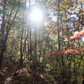 Sunbeams through the trees.- Tennessee Rock Trail
