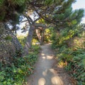 The trail leads through a tunnel of overhanging trees.- Patrick's Point