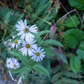 Wildflowers grow along the trail.- Patrick's Point
