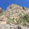 Catcus along trail to Picacho Peak.- Picacho Peak via Hunter Trail