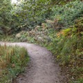 The trail starts off shaded by trees and shrubs.- Wedding Rock Coastal Access
