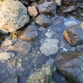 Tide pools here are filled with hermit crabs, snails, and rock crabs.- Wedding Rock Coastal Access