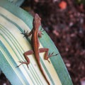 Small lizard in the gardens- Vizcaya Museum + Gardens