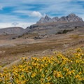 Wildflowers in Alaska Basin.- Teton Crest Trail