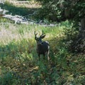 Deer eating near the trail.- Teton Crest Trail