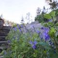 Unidentified wildflower species (help us identify it by providing feedback).- Helen Hunt Falls Hike