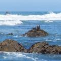 Harbor seal sun bathing on a rock.- Palmer's Point + Coastal Access