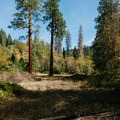 A pair of sequoias lie in the small meadow inside of the loop.- Ah-Di-Na Campground
