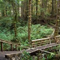 The trail has sections of rooty dirt and mud as well as some boardwalk sections.- Mystic Beach