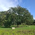 The garden is landscaped with many varieties of beautiful trees.- Brooklyn Botanic Garden