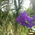 Brightly colored orchids bloom in the Aquatic House.- Brooklyn Botanic Garden
