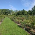 The rose garden is most captivating in spring, but it is a lovely place to take a stroll any day of the year.- Brooklyn Botanic Garden