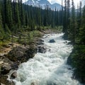 The Little Yoho River runs milky white with glacial sediment. - Iceline Trail