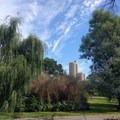 The New York skyline peeks through a gap in the trees.- Brooklyn Botanic Garden