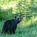 This is grizzly country, so take proper bear safety measures.- Northover Ridge