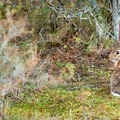 The park has a very large population of rabbits.- Rathtrevor Beach