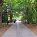 A walking path in Bicentennial Capitol Mall State Park.- Bicentennial Capitol Mall State Park