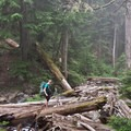 Creek crossings between Deeks and Brunswick Lakes.- Howe Sound Crest Trail