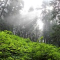 Beautiful light streaming through the clouds and canopy.- Howe Sound Crest Trail