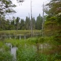 Bog on the way to Mount Franklin.- Greenstone Ridge Trail