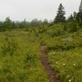 Trail westbound from Mount Ojibway.- Greenstone Ridge Trail