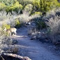Mule deer can be spotted along the trail, and keep an eye open for black bears as well.- Window Trail