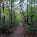 Flat forested path for much of the way.- Sope Creek