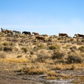Wild horses near the spring.- Applegate Hot Springs