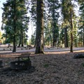 Sites sit in a scenic high-altitude forest.- Stough Reservoir