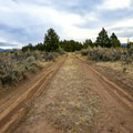 The dirt road approaching the springs.- West Valley Warm Springs