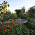 Community vegetable garden at A.M. Kennedy Park.- A.M. Kennedy Park